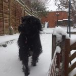 Trudy in the snow by Amelia Gibson