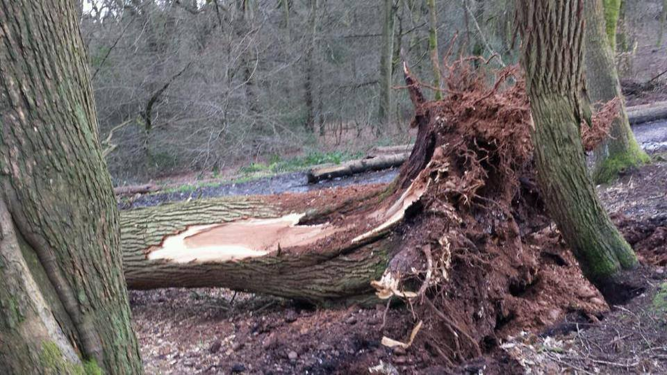 James Windridge saw 3 trees fall in woodland at Lickey Hills Country Park