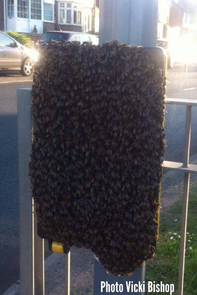 0bees1