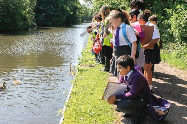 Pupils from Ark Rose Primary Academy take time out from their walk to greet the newborn baby geeese on the canal by Kings Norton