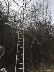 Ladders at the ready
